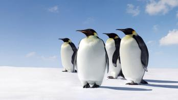 Penguins on ice 2