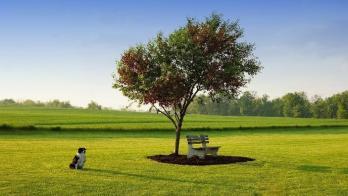 TREE Thrive 6
